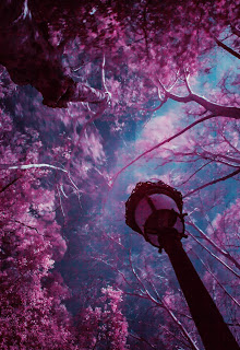 image of a fantasy world with a blue sky, pink-leafed trees, and a lamp post